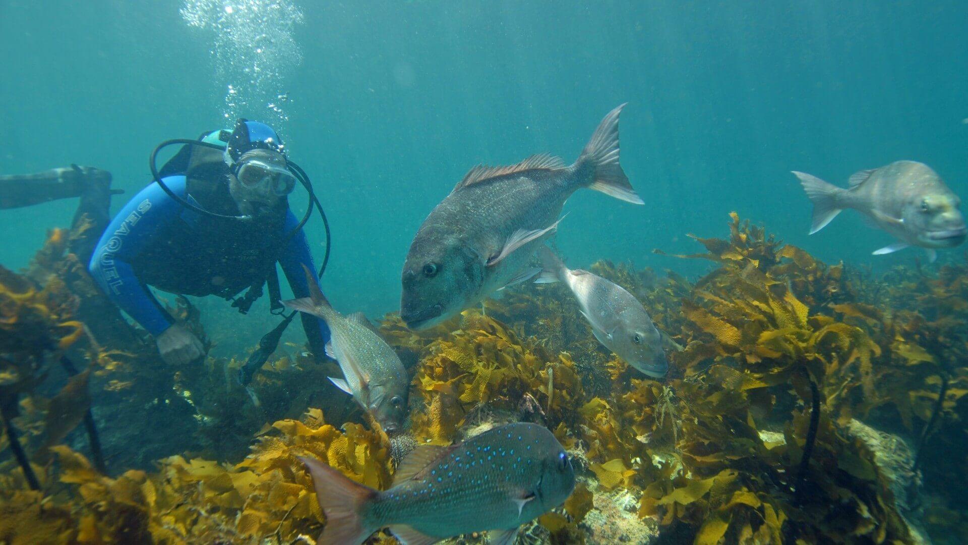 Goat Island Marine Reserve - Matakana Coast