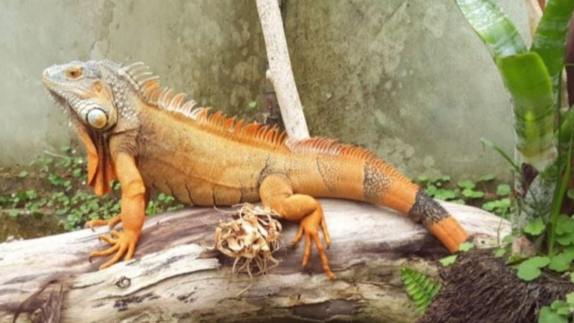 Top 10 things to do with kids Ti Point Reptile Park Matakana Coast