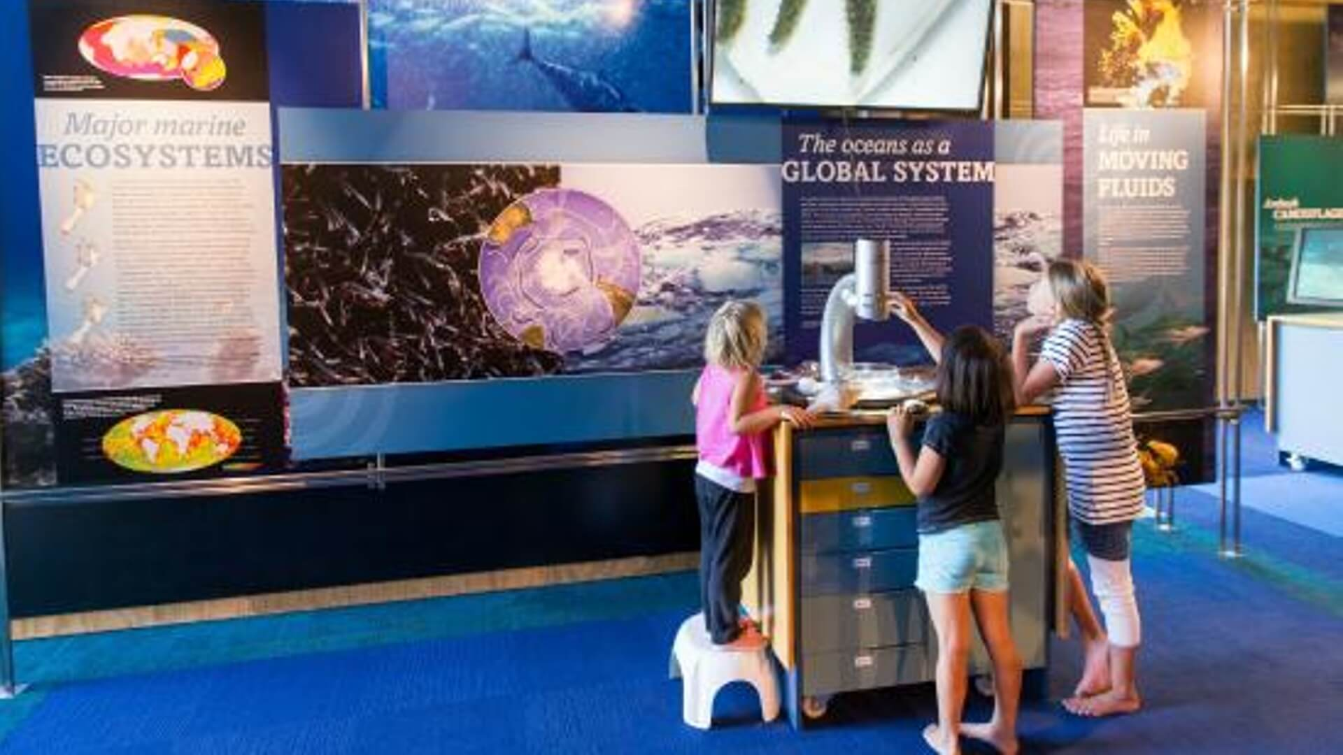 Goat Island Marine Reserve - Top 10 things to do with kids