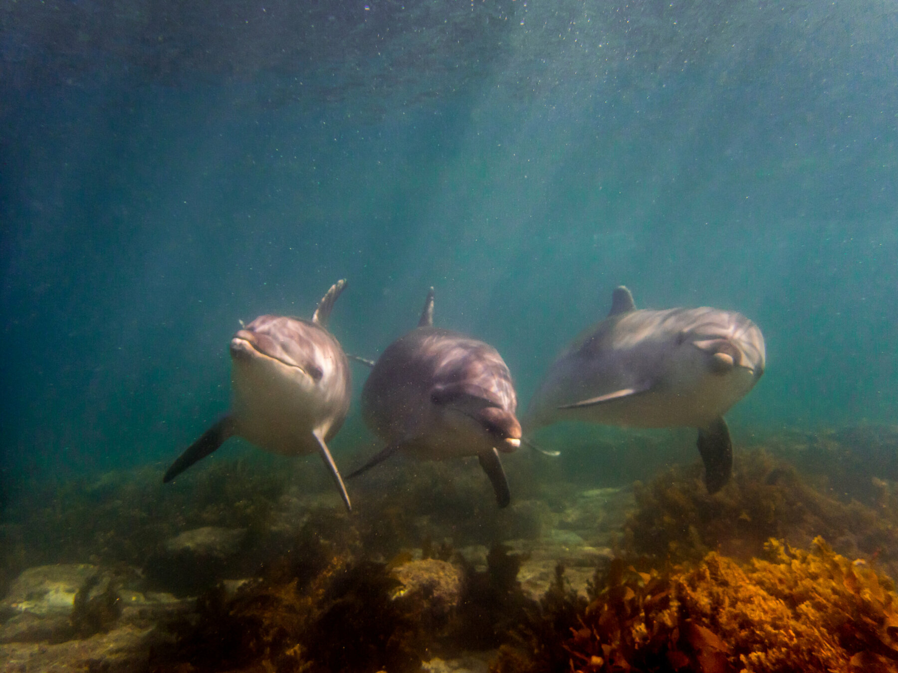 Diving on Matakana Coast