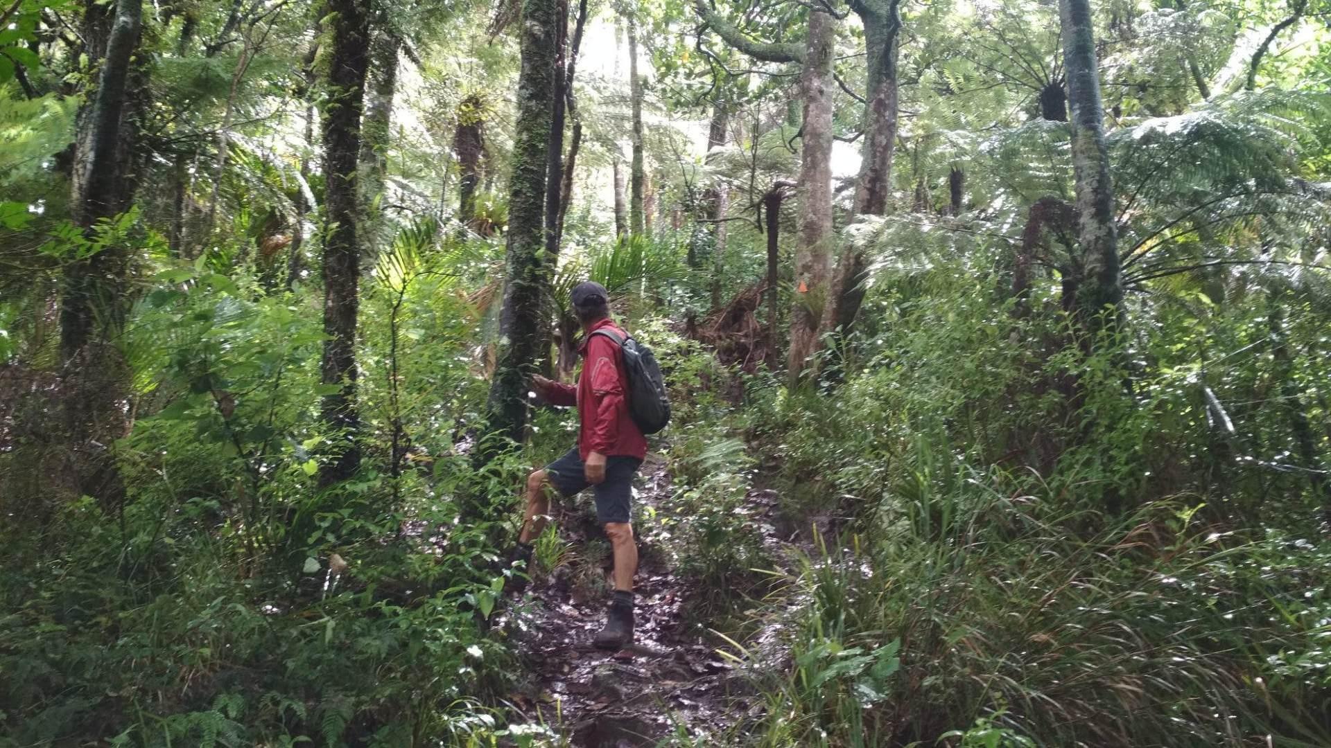 Mt Tamahunga - Walks for family and tiny legs